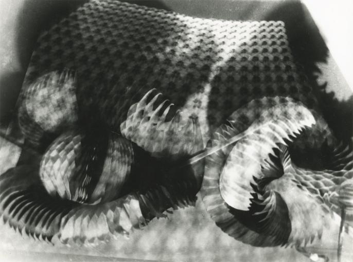 Hausmann, phantasmagorie, 1950
